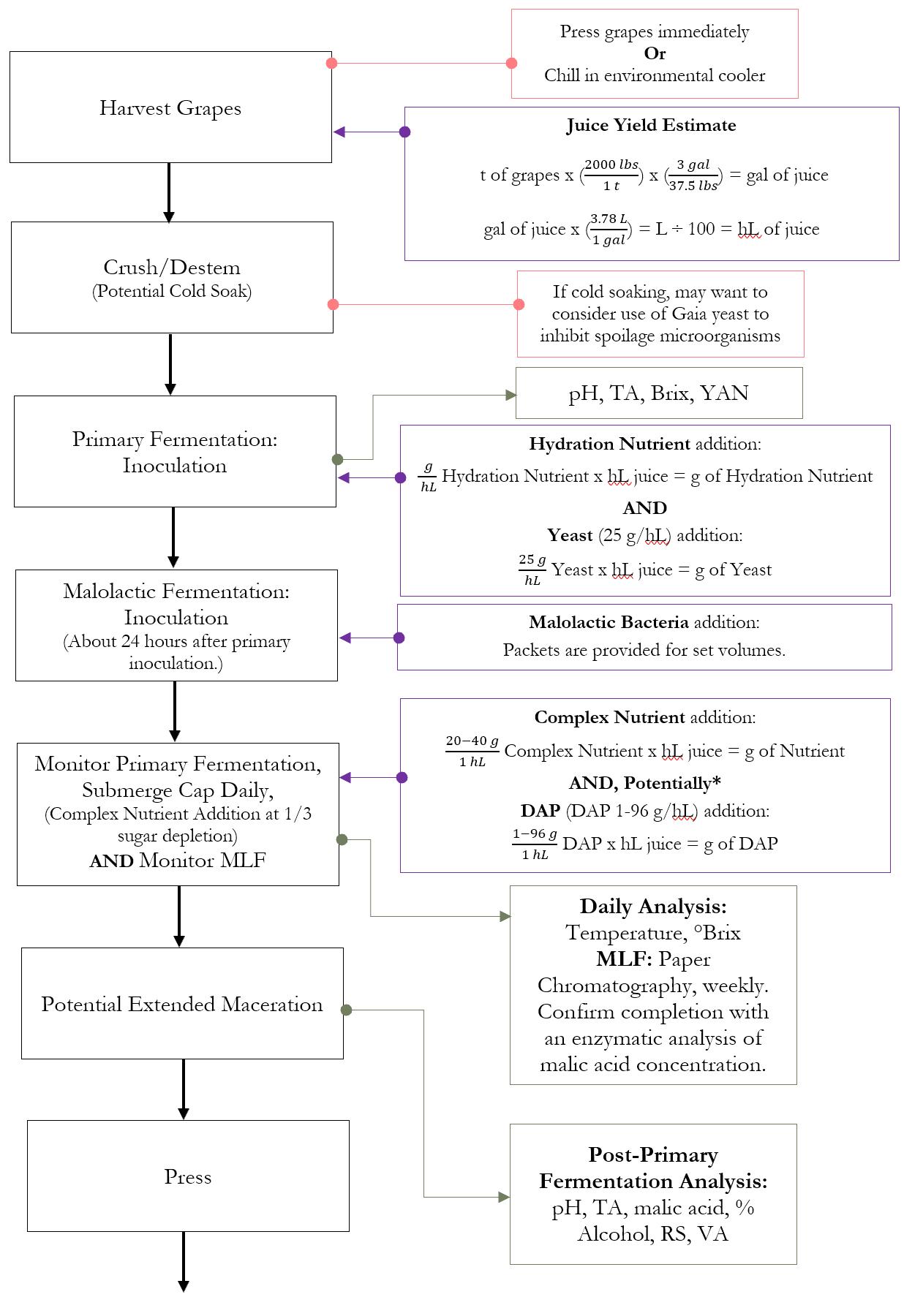 Red Wine Production Co-Fermentation Process Part 2