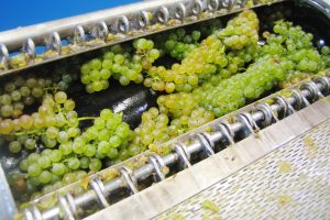 Full Cluster Pressing for White Wine